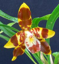 An Introduction to Orchids - Part 1