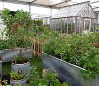 Greenhouse and allotment