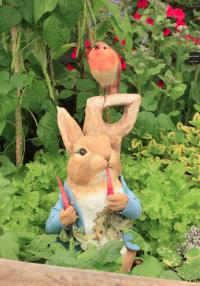 Peter Rabbit in the garden on the Hooksgreen herbs stand